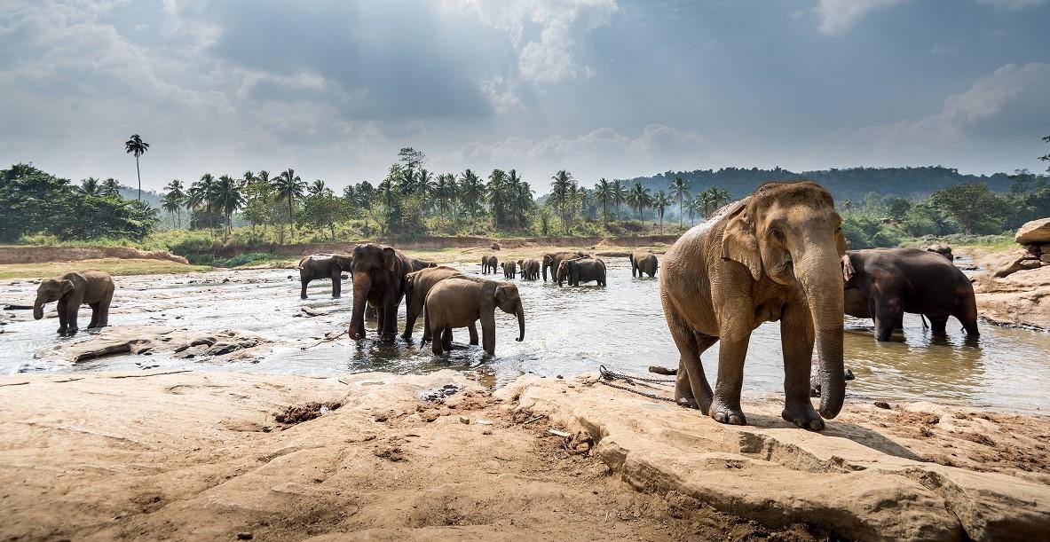 Sri_Lanka_Pinnawala_Tour