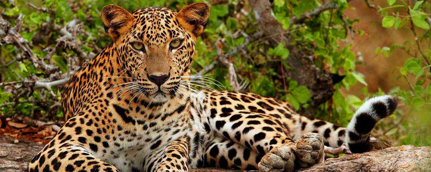 randidu-cabs-wildlife-safari