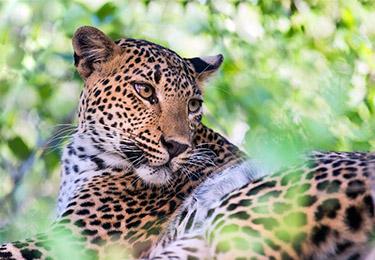 sri lanka best places to visit yala national park packages sri lanka