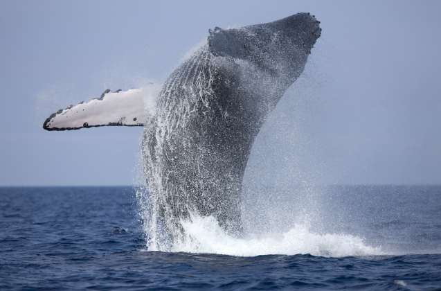 whales watching Sri Lanka tour attractions Sri Lanka Tour Packages administrator Randidu Cabs & Tours